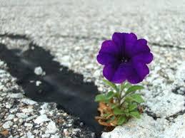 flower breaks through ashpalt