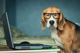 dog in glasses at computer