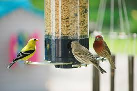 3 birds at feeder.jpg